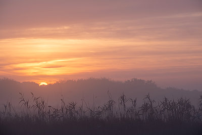 Sunrise in autumn  - p739m2026085 by Baertels