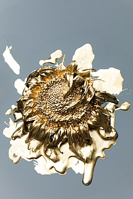 Sunflower painted in gold - p919m2195651 by Beowulf Sheehan