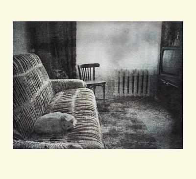 Wohnzimmer mit Sofa und Katze - p979m1513307 von Iren Dymke