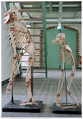 Affen - p1205m1020929 von Annet van der Voort