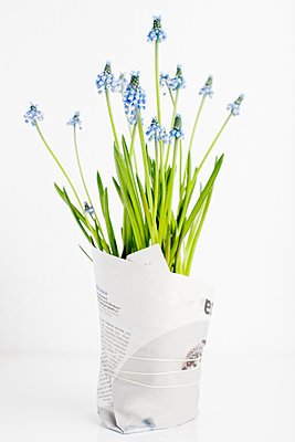 Blue flowers wrapped in paper - p312m1551976 by Johner Images