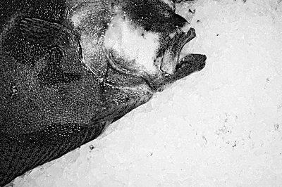 Fisch auf Eis - p3200158 von Jens Haas