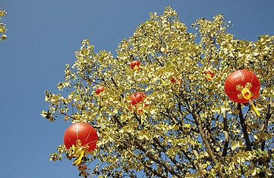 Chinesische Lampions - p0450550 von Jasmin Sander