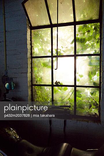 Blick aus Lagerhalle in Garten - p432m2037828 von mia takahara