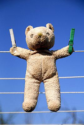 Teddy trocknet - p0440190 von Christiane Stephan
