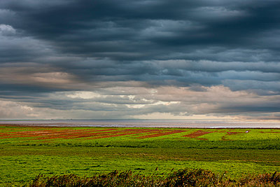 Landscape with mudflats - p248m951418 by BY