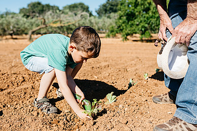 Grandfather and grandson planting vegetables in the field - p300m2114552 von Josep Rovirosa