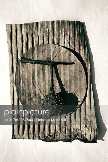 Chestnut on cardboard - p1017m2237844 by Roberto Manzotti
