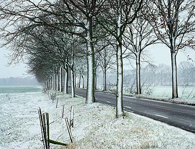 Trees in winter - p1132m1016972 by Mischa Keijser
