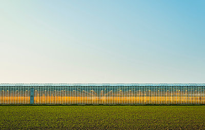 Greenhouse in Westland,  area with the highest concentration of greenhouses in Netherlands - p429m1557423 by Mischa Keijser