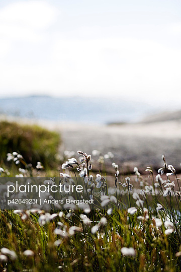 White small flowers in meadow