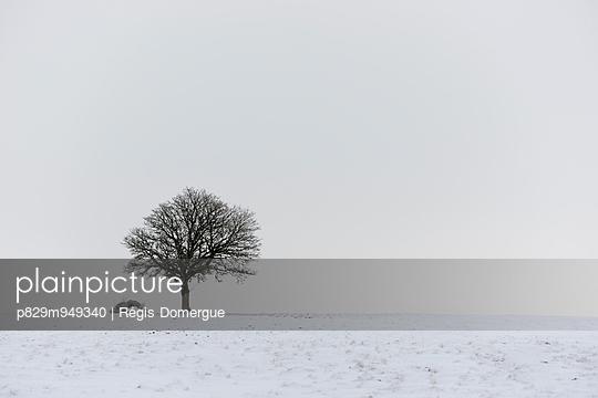 Winter - p829m949340 von Régis Domergue