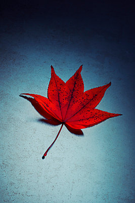 Still life of autumnal leaf on speckled background - p597m2220269 by Tim Robinson