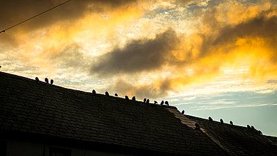 Vögel - p815m1503506 von Erdmenger
