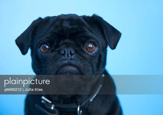 p6690212 von Jutta Klee photography