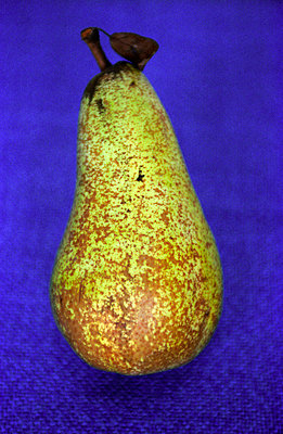 Pear - p1650020 by Andrea Schoenrock