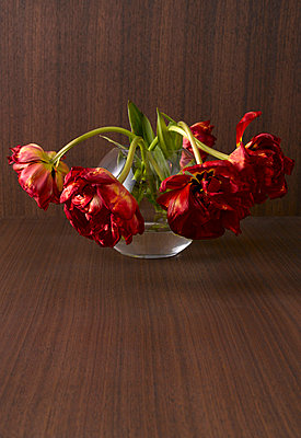 Withering bunch of tulips - p3004870f by Kai Schwabe