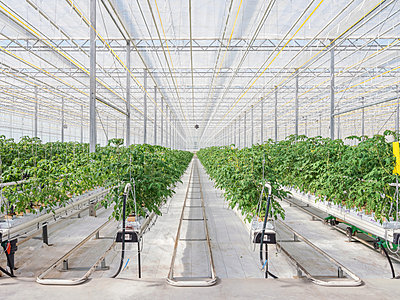 Gewächshaus für den künstlichen und autarken Anbau von Gemüse - p390m2053558 von Frank Herfort