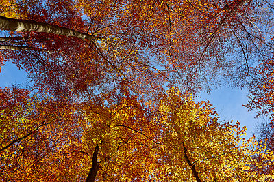 Herbst - p587m1466527 von Spitta + Hellwig