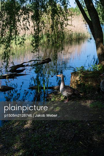 Bird on the shore - p1505m2128746 by Jakob Weber