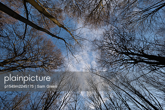 Treetops against the sky, worm's eye view - p1549m2245175 by Sam Green