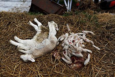 Tierhaltung - p1058m817170 von Fanny Legros