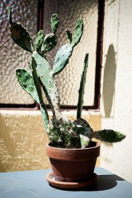 Cactus - p1149m1147031 by Yvonne Röder