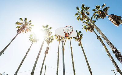 Outdoor basketball court surrounded by palm trees - p300m1141058 by Lighteffect