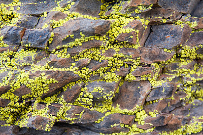Yellow lichen grows on rock in the Sierra de San Francisco - p3433451 by Ethan Welty