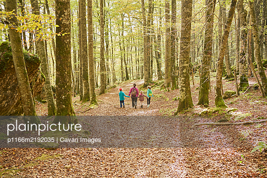 Family walking in a beech forest - p1166m2192035 by Cavan Images