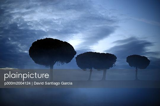 Spain, Castilla y Leon, Province of Zamora, Reserva natural de Lagunas de Villafafila, trees and clouds - p300m2004124 von David Santiago Garcia