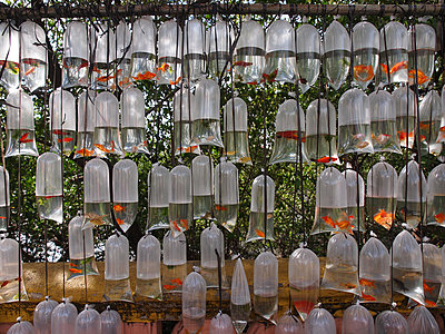 Goldfishes for sale - p338m971704 by Marion Beckhäuser