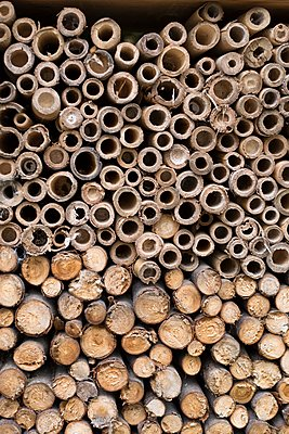 Insect hotel - p445m2053336 by Marie Docher