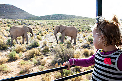 Elefanten in Südafrika - p712m1159982 von Jana Kay