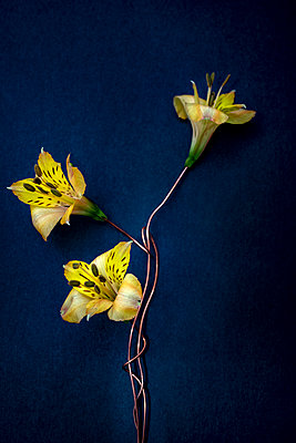 Flowers with wire - p971m2231647 by Reilika Landen