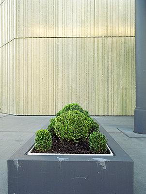Fassadendeko - p4140141 von Volker Renner
