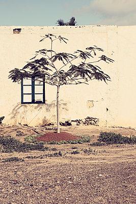 Charco del Palo, Lanzarote - p1162m963162 by Ralf Wilken