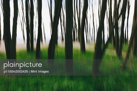 p1100m2002435 von Mint Images