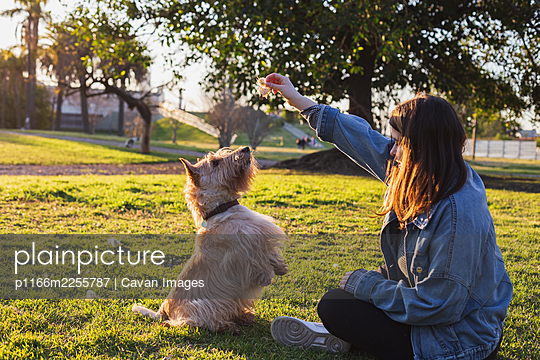 Girl playing with dog in city park at sunset in city park - p1166m2255787 by Cavan Images