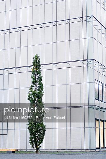 Baum vor dem Musem der bildenden Künste, Leipzig, Sachsen, Deutschland - p1316m1160372 von Peter von Felbert