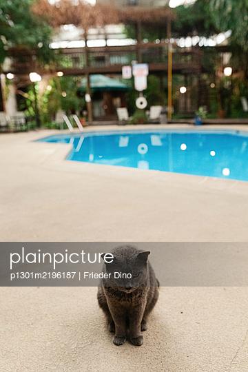 Cat in front of swimmingpool - p1301m2196187 by Delia Baum