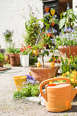 Flower pots and watering can in front of house - p312m1552041 by Scandinav Images