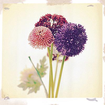 Blumen Stillleben  - p586m1110027 von Kniel Synnatzschke