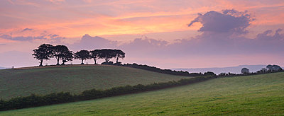 Iconic Exmoor beech trees at dawn in summer near Luccombe - p871m861637 by Adam Burton