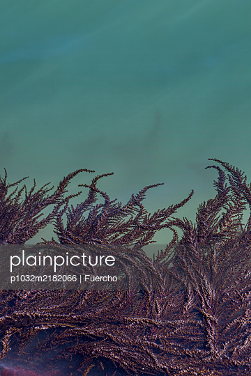 Algae on the water surface - p1032m2182066 by Fuercho