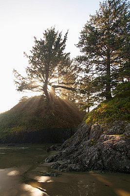 Sun Rays Shine Through A Tree On Long Beach In Pacific Rim National Park Near Tofino; British Columbia Canada - p442m699866f by Deddeda