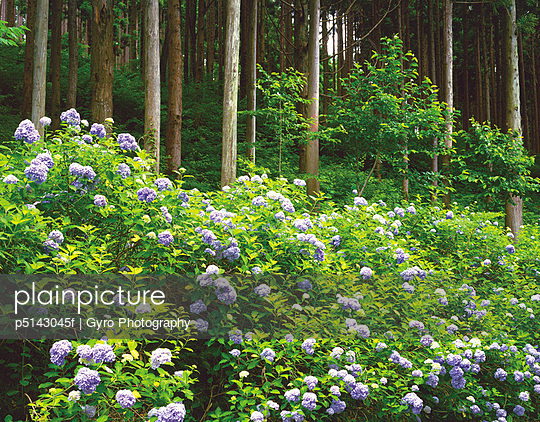 Forest and Hydrangea bushes