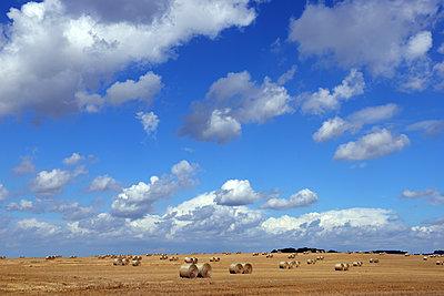 Harvested field - p1016m2206034 by Jochen Knobloch