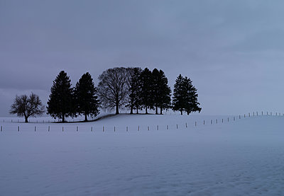 Grove and snow-covered fields - p552m1510389 by Leander Hopf