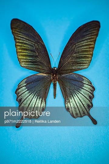 Butterfly - p971m2222518 by Reilika Landen